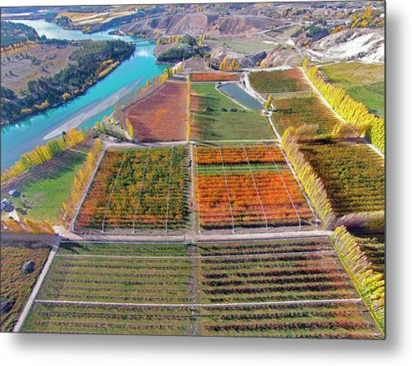 Aerial Over Autumn Orchards Metal Print by David Wall
