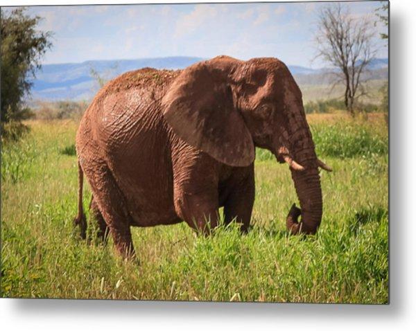 African Desert Elephant Metal Print