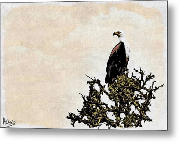 African Fish Eagle Metal Print