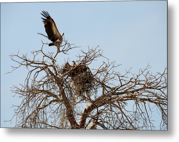 African Series Birds Metal Print by Katherine Green