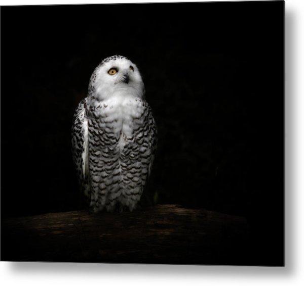An Owl Metal Print