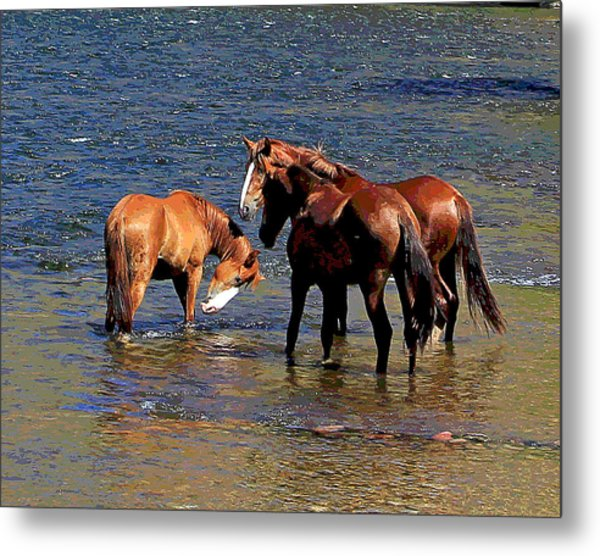 Arizona Wild Horses On The Salt River Metal Print