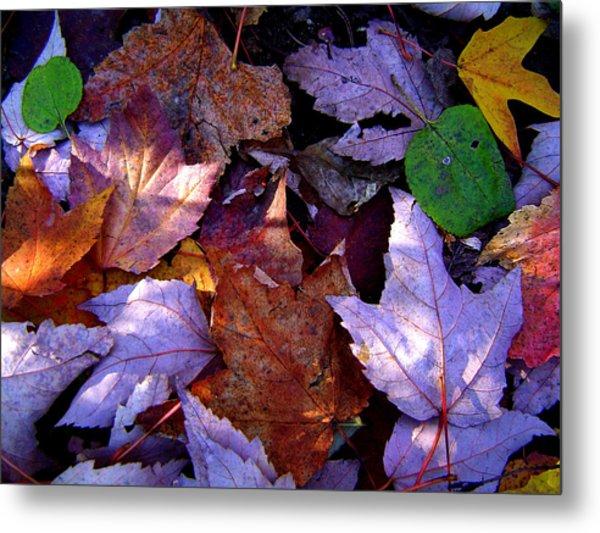 Autumn Groundcover Metal Print