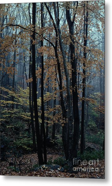 Autumn In The Forest Metal Print by Adeline Byford