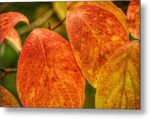 Autumn Leaves Metal Print by Kathi Isserman