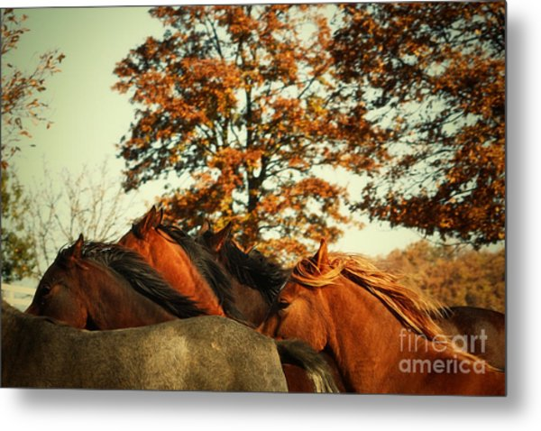 Autumn Wild Horses Metal Print