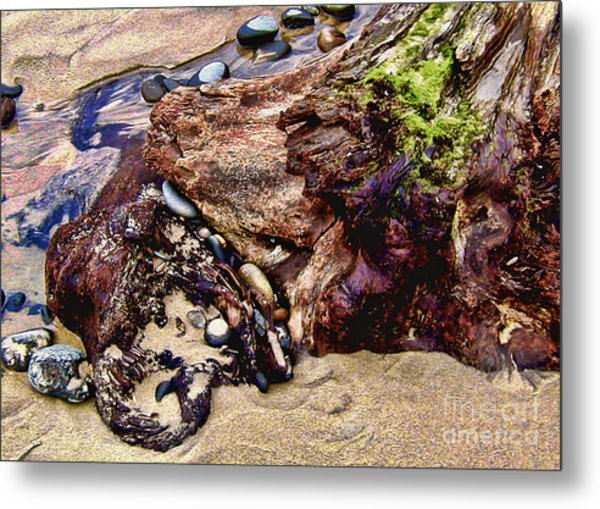 Beach Stump And Stones Metal Print by Joseph Vittek