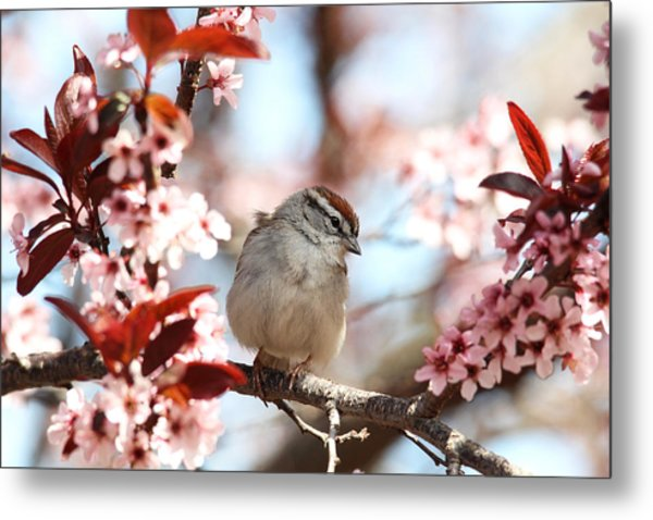 Beautiful Sparrow Metal Print