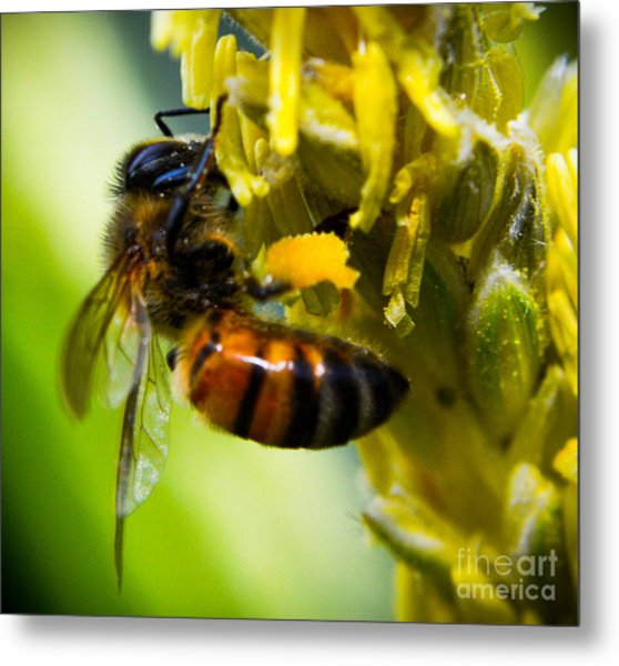 bee Metal Print by Kenroy Rhoden
