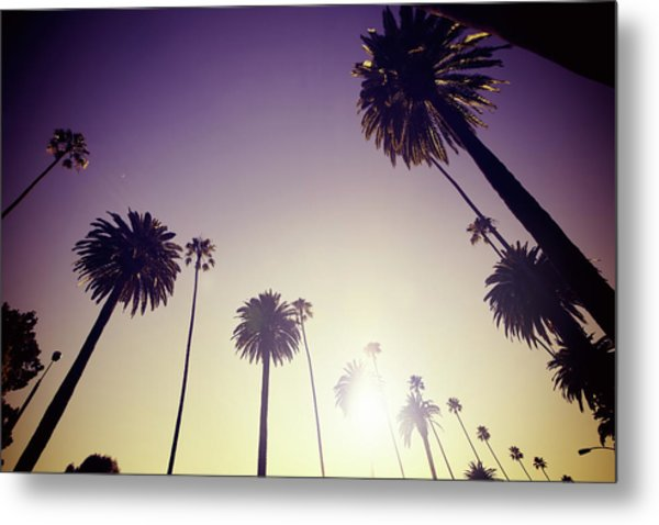 Beverly Hills Palm Trees Metal Print