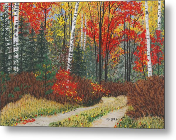 Birch Trail Metal Print