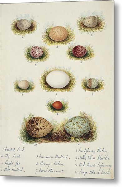 Bird Eggs From India Metal Print