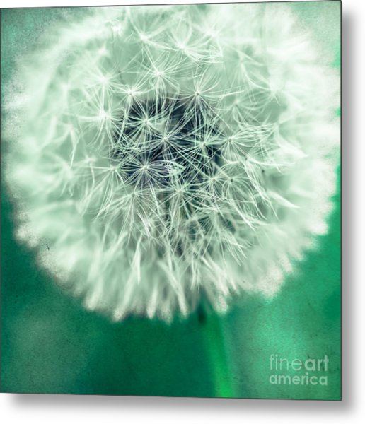 Blowball 1x1 Metal Print