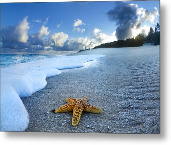 Blue Foam Starfish Metal Print