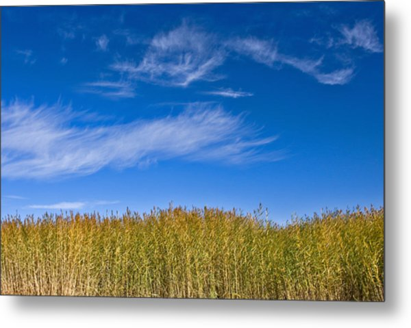 Blue Sky Metal Print by Jason KS Leung