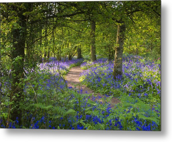 Bluebell Woods Walk Metal Print