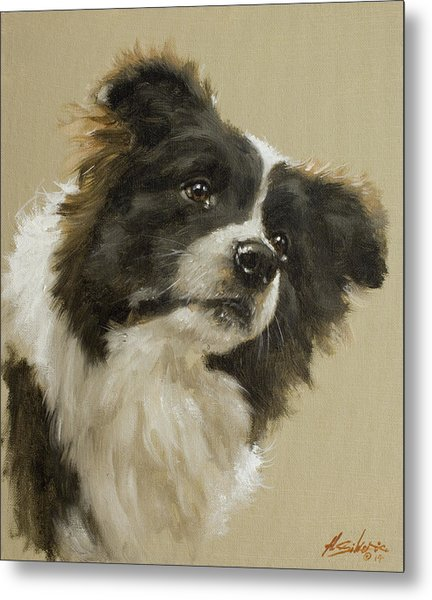 Border Collie Portrait Vi Metal Print
