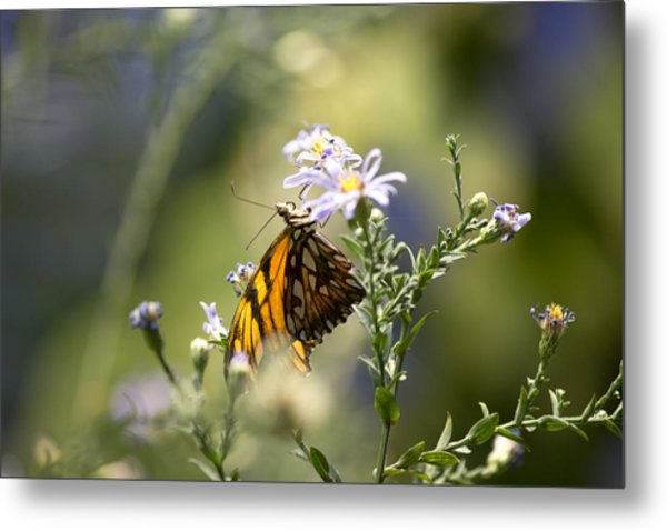 Brown Butterfly Metal Print