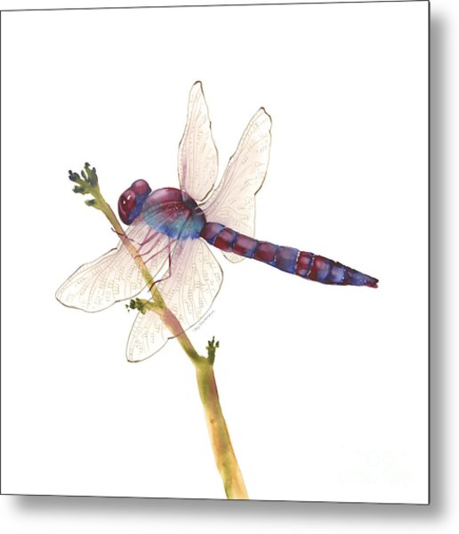 Burgundy Dragonfly  Metal Print