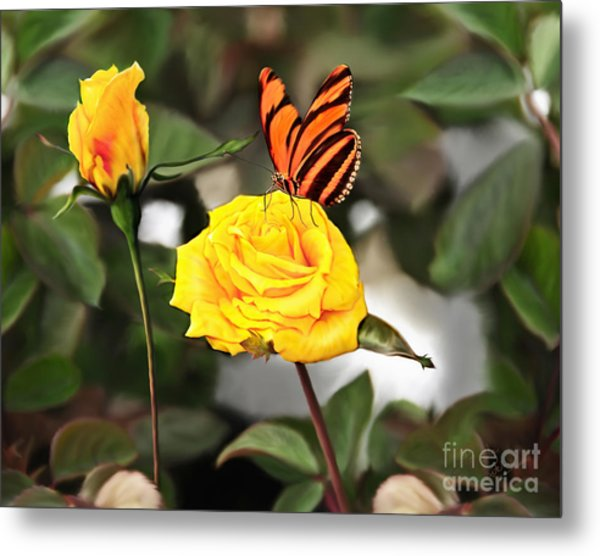 Busy Butterfly Metal Print