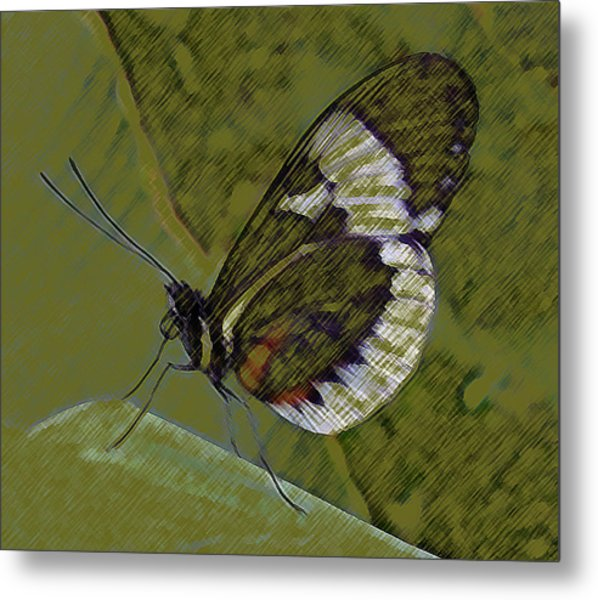 Butterfly Green Metal Print