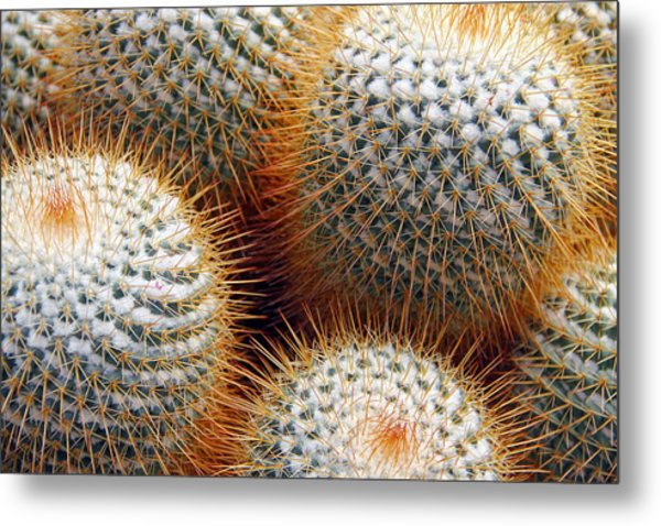 Cactus Metal Print by Jim McCullaugh