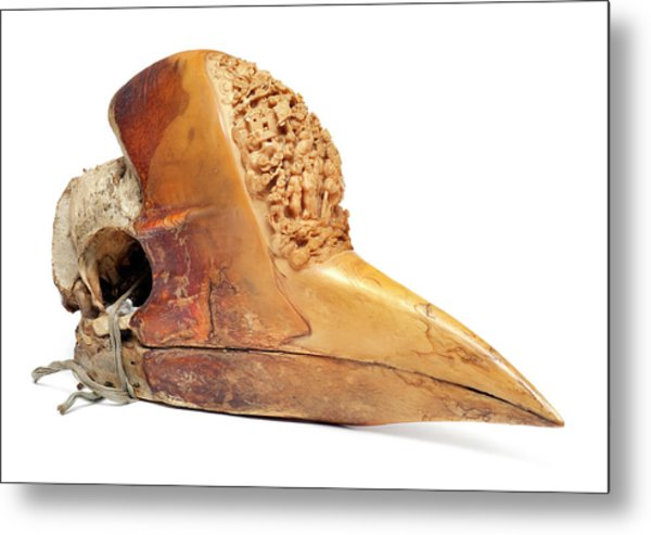 Carved Hornbill Skull Metal Print