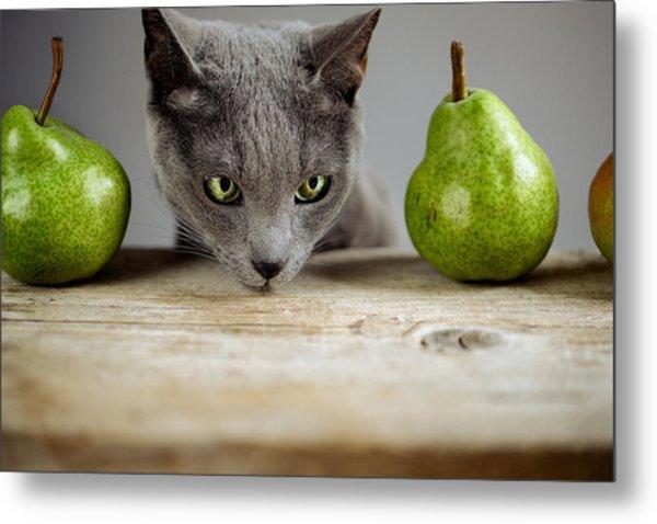 Cat And Pears Metal Print