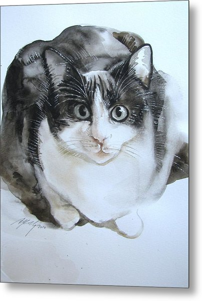 Cat In Black And White  Metal Print by Alfred Ng