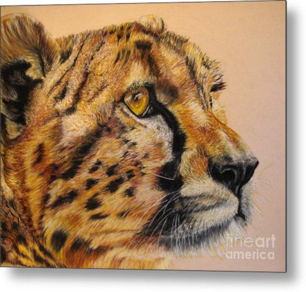 Cheetah Gaze Metal Print by Ann Marie Chaffin