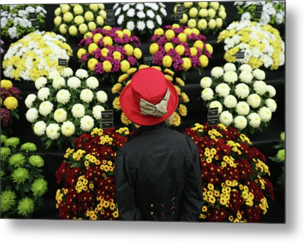 Chelsea Flower Show 2013 - Press Day Metal Print by Dan Kitwood