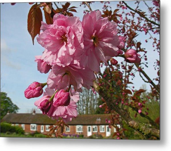 Cherry Blossom Spring Metal Print