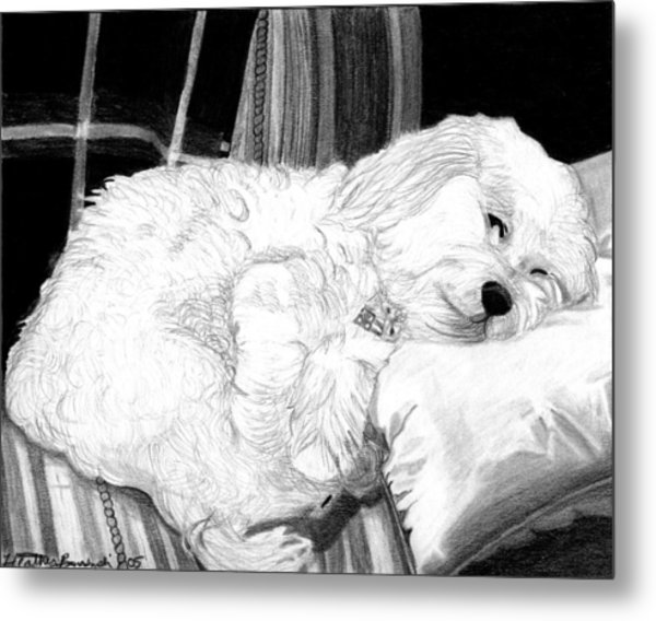 Cockapoo Dog Portrait   Metal Print by Olde Time  Mercantile
