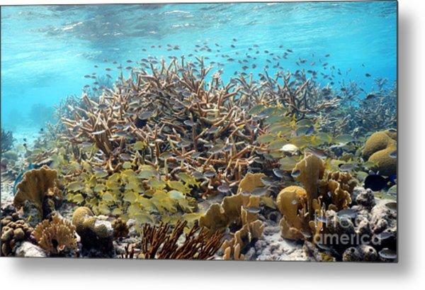 Colorful Tropical Reef Metal Print