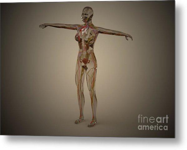 Conceptual Image Of Human Nervous Metal Print