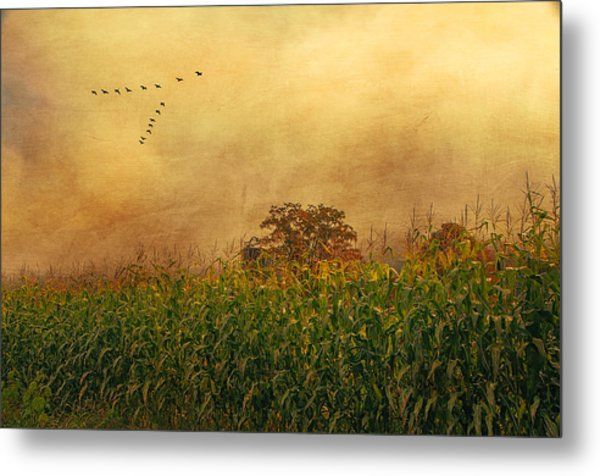 Cornfield And Fog Metal Print