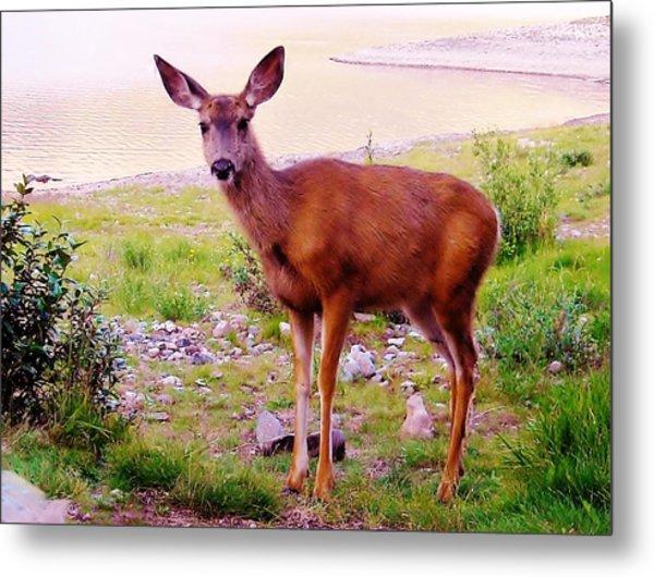 Deer Visit Metal Print