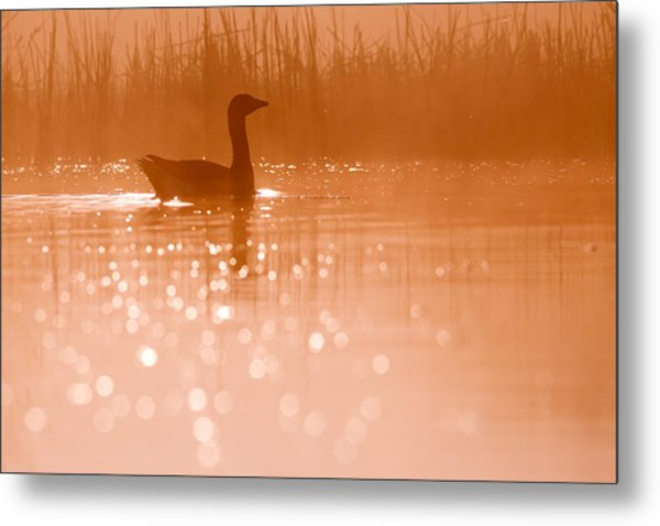 Early Morning Magic Metal Print
