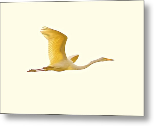 Egret In Flight Metal Print
