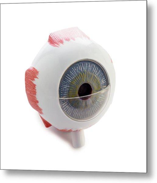 Eye Anatomy Model Metal Print