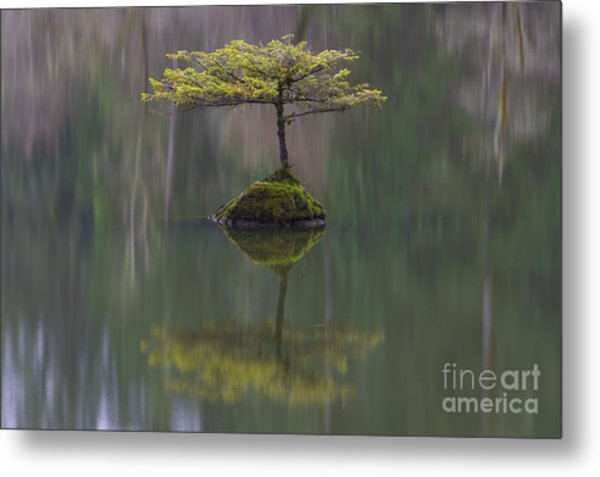 Fairy Lake Fir Metal Print