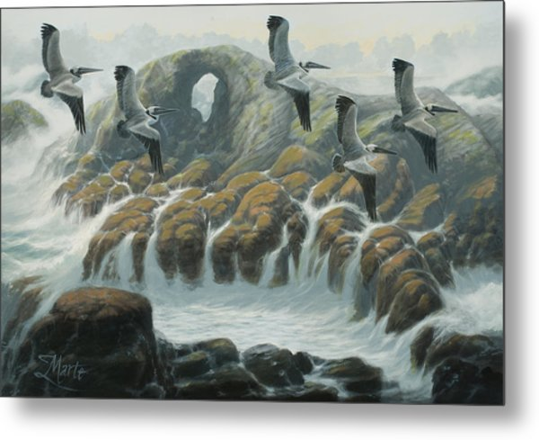 Farallon Pelicans Metal Print by Marte Thompson