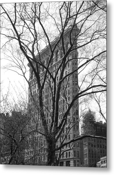 Flat Iron Tree Metal Print