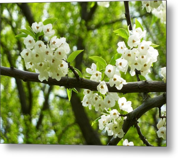 Flowers In The Spring Metal Print