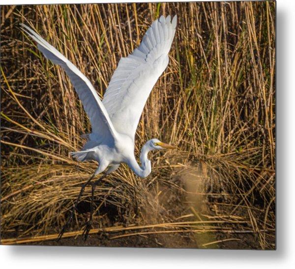 Flying White Egret Metal Print