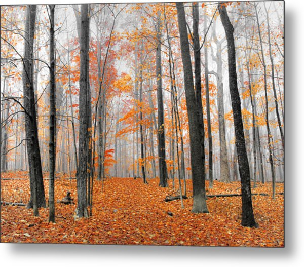 Foggy Morning Metal Print by Anna-Lee Cappaert