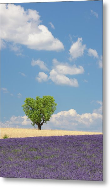 France, View Of Lavender Field With Tree Metal Print by Westend61