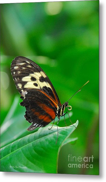D5l15 Butterfly At Franklin Park Conservatory Metal Print