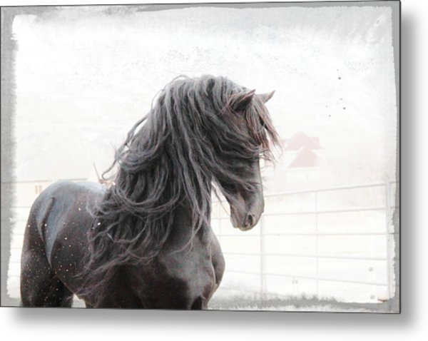 Friesian Magic Metal Print