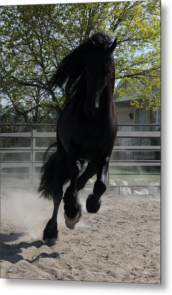 Friesian Spirit Metal Print